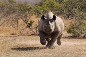 Absolute Africa, African Safari