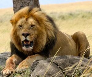 African Safari, Safari Trips