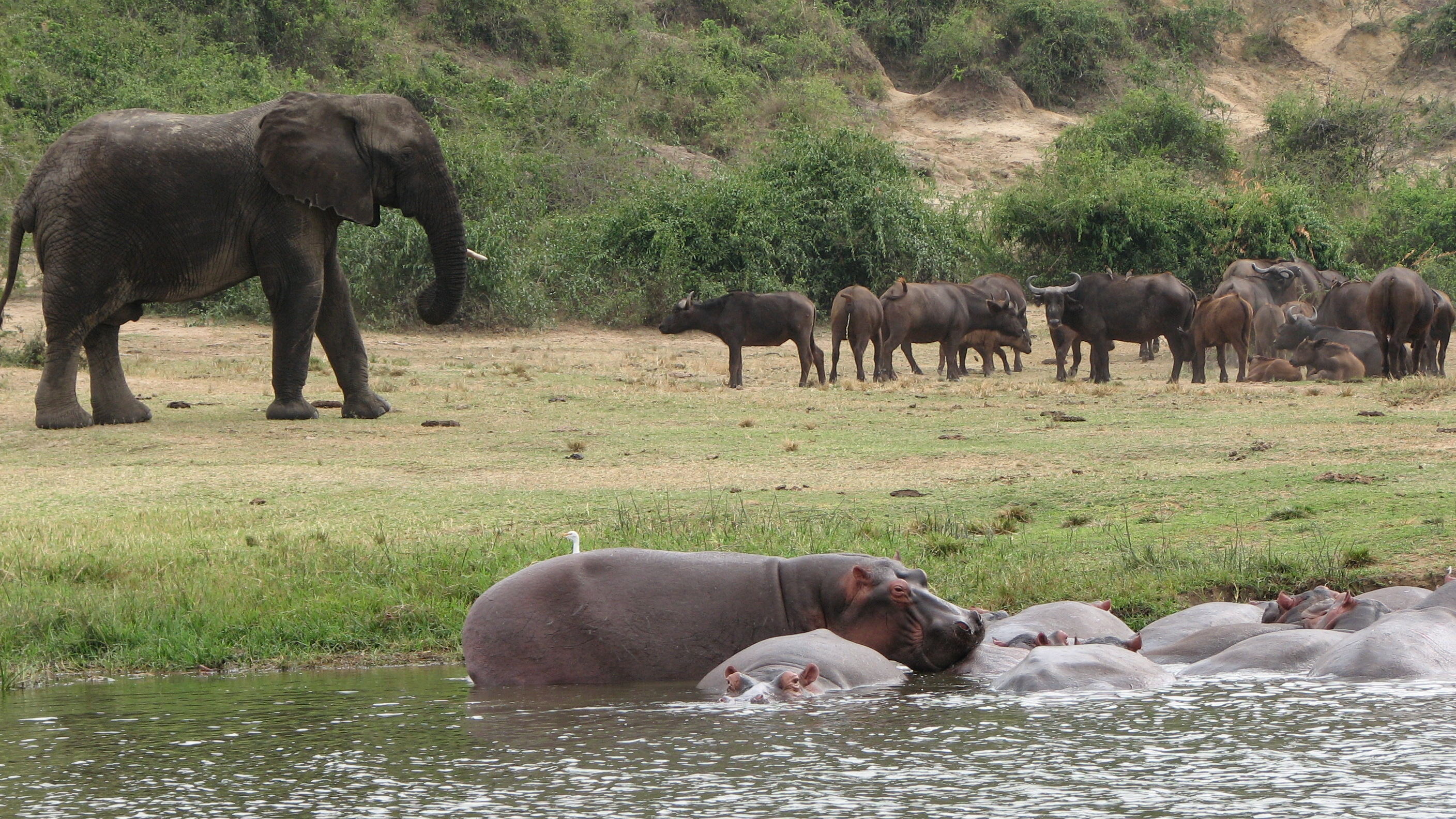 Elephant and Hippo at the Queen Elizabeth National Park